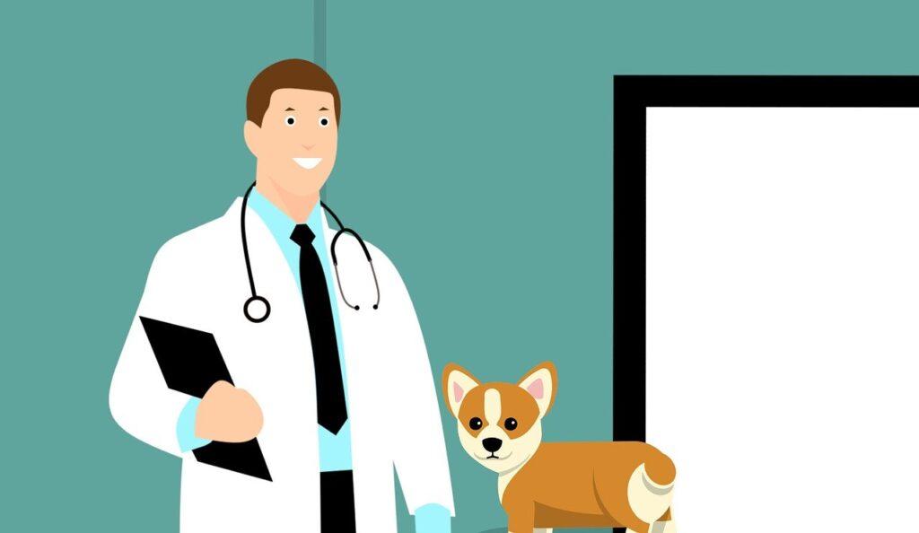 Ветеринар, Врач, Собака, Щенок