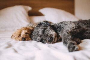 Кровать, Собака, Животные, Домашние Животные