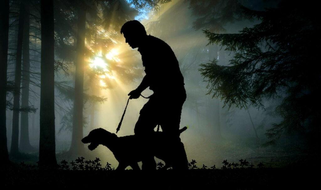 Ходьба, Человек, Собака, Животные, Лес, Досуг
